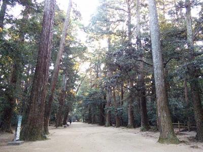 鹿島神宮奥参道2