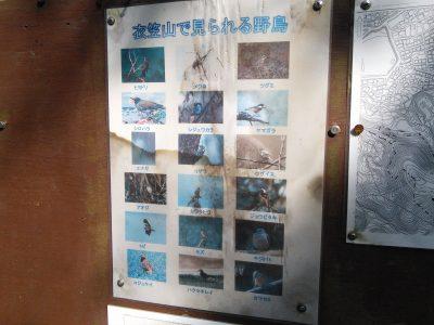 衣笠山で見られる野鳥