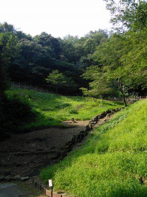 自然豊かな衣笠山