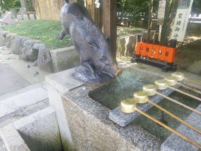 猪から水が